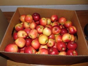 Gala peewee apples